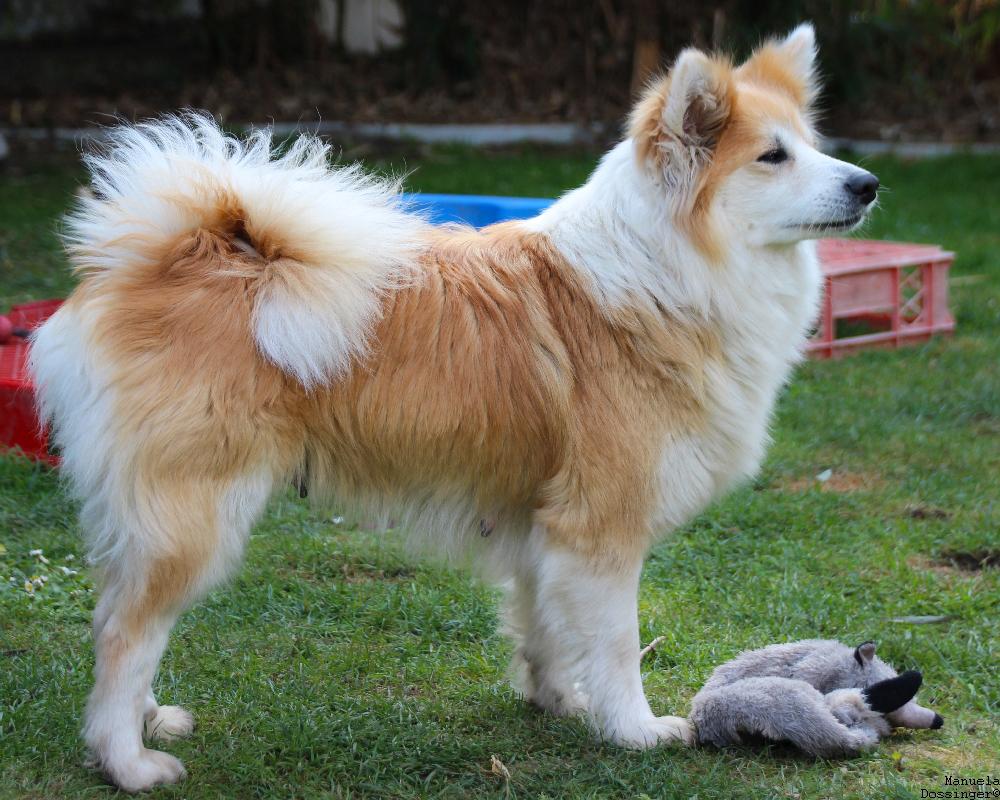 kiva-sheepdog
