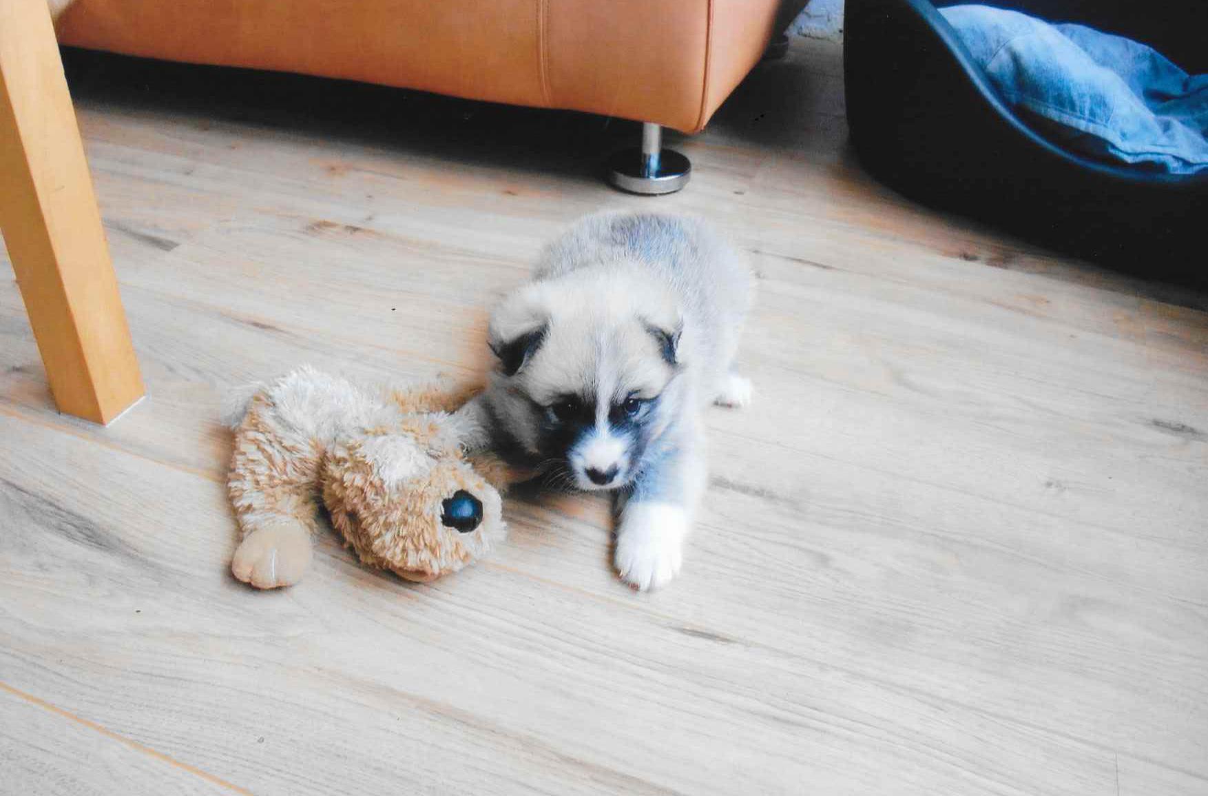 puppy2009fenna